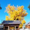 『地蔵寺の大銀杏』