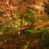 【撮影】日本で最も遅い紅葉を「熱海梅園」で撮影してきました