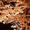 春は夜桜、夏は星、秋は満月、冬は雪
