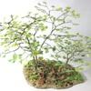 樹木模型の製作(1/35ミニチュアスケール ディオラマ用)