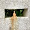 狸、鍾乳洞を発見する