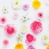 花の定期便でどのような花が届くのか見てみたい。比較検討。まとめ