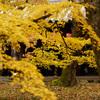 超鮮やかで、燃えるような色づきの紅葉の東福寺へ行ってきた@2017秋
