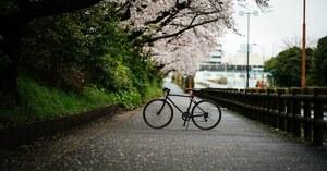 その写真、どこのカメラで撮りました? 📸Nikon使いの皆さんが撮ったオオワシ、桜並木、レーザービームetc. 【カメラ特集・第1回】