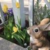 ウサギちゃんちょっと不安