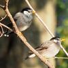 足立区舎人で出会った野鳥