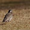 野鳥いろいろ(3)