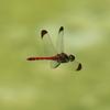 宇治市植物公園の昆虫たち!