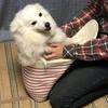 甲斐犬サンの愛情比較の巻〜続編O―(*´∀`*)―Oダキシメテー!