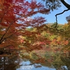 照葉なりて秋色 神戸森林植物園