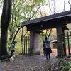 静かな静かな森の秋