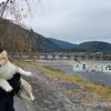 噂には聞いてたが、京都がすごい観光地になっていた。。。嵐山