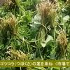 ゴツコラの常食が、カラダの90%を占める毛細血管拡張作用をもたらし血の循環を蘇らせる、、、ただ、そうするためにはゴツコラの新鮮野菜がたくさん必要。 いやぁ~、こまった。そこを課題するか。。 ^-^;