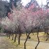 梅の香が楽しい季節に。