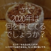 1135食目「さて2020年は何を育ててるでしょうか?」ヒント:もちろんキノコです。しいたけではありません。もっと背が高いです。