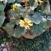 令和3年正月の我が家の庭に春はもう居る!