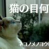猫の目、何色?