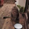 猫まるちゃんがいるダリア食堂にタジン鍋を食べに行ってみた。(日本橋大伝馬町)