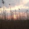 雄蛇ヶ池から食虫植物群落へ