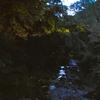 小豆島旅行の話⑨ 蛍ツアー