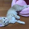 猫「あ、ここベッドちゃうやんけ!」