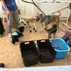 ワンちゃんの歯磨き教室
