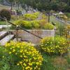 霊園風景 その91 「‥ダコタゴールドの彩り」