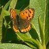 こころ引かれた蝶