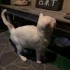 野良猫ぶささん、初めてお風呂に入る♡ ~きっと生まれて初めてなんじゃないかと思う~