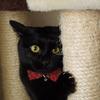 今日の黒猫モモ&黒白猫ナナの動画ー675
