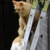 梯子と猫と・・・ 5連発!