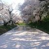 青森・弘前城の満開の桜!お堀を埋め尽くす花びら「花筏」が美しい