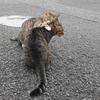 8月後半の #ねこ #cat #猫 その1