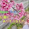 3/23(火)ラジオ沖縄🌟華天テーマは→【公園にありそうなもの】