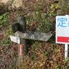 のんびり定義ライドとその先の熊沢林道