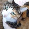 【愛猫日記】毎日アンヌさん#242