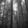 森、モノクロで 2
