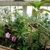 安くて温かい「夢の島熱帯植物館」へ行ってきたよ!