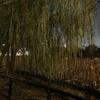 【女一人旅】東京あちこち・上野恩賜公園(東京都台東区を歩こう)不忍池の怖い話 ⑴入水した柳の前、恋人・感応丸の後を追って~愛し合う二人の悲恋~(室町時代)怪談