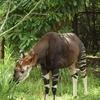 舞台「けものフレンズ2〜ゆきふるよるのけものたち」に登場する動物が見られる動物園・水族館