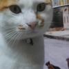 漱石忌とうちの初代、2代目猫