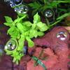 水中葉と追われるメス