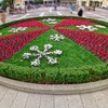 クリスマスな花壇
