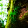 苔むす森に 苔は静かに時を待つ