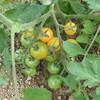 菜園の様子17