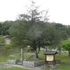 御火葬場の木