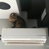 ダイキン「うるさら7」が壊れるだろ! 猫からエアコンを守る作戦! フィルターの交換目安は?