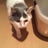 【猫ブログ】ココちゃんとは・・・