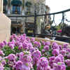 コロンブスとピンクの花