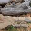 薪の準備 屋根掛け完了 Preparation of firewood
